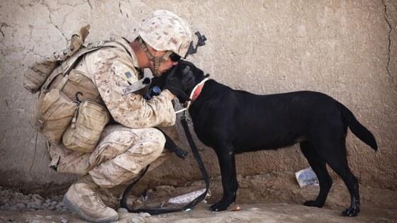 soldaat militair defensie met hond
